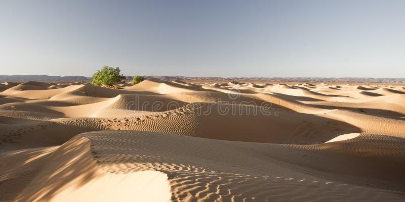 Albero sul deserto immagine stock