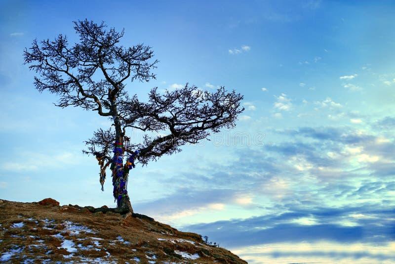 Albero sul lago Baikal immagine stock
