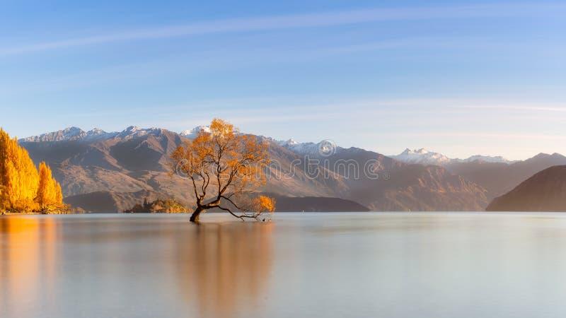Albero sul lago Wanaka che è punto di riferimento famoso in isola del sud, Ne immagini stock libere da diritti