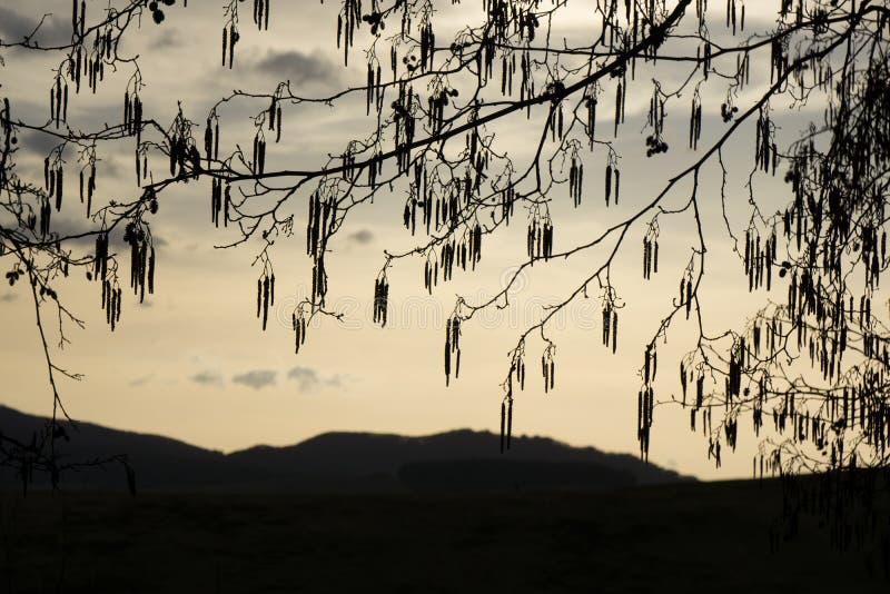 Albero sul prato nel tramonto slovakia fotografia stock