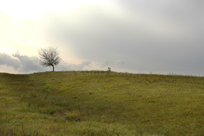 Albero sull'orizzonte con le nuvole ed i raggi di Sun immagini stock libere da diritti