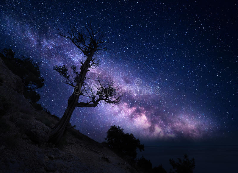 Albero sulla montagna contro la Via Lattea Paesaggio di notte fotografia stock libera da diritti