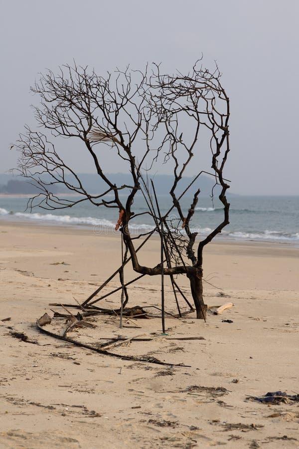Albero sulla spiaggia fotografie stock