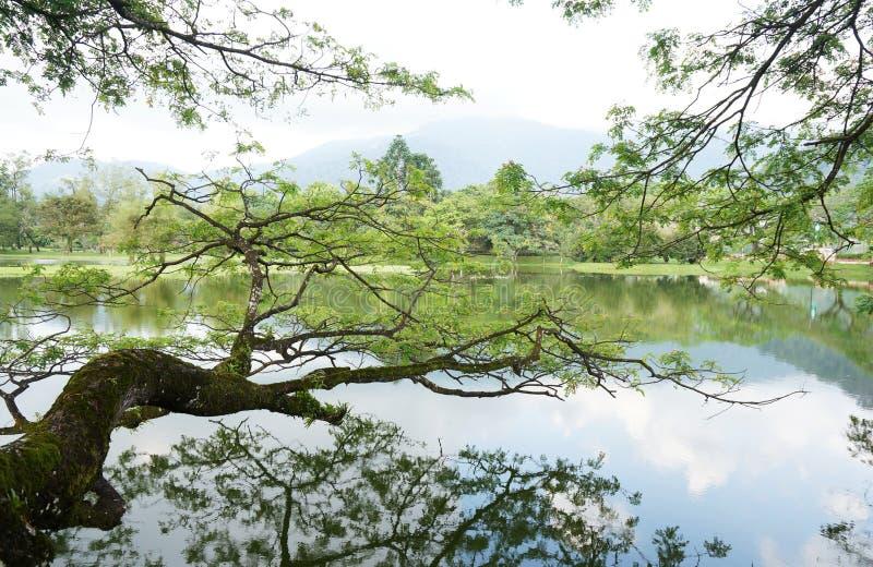 Albero sulla superficie del lago immagine stock