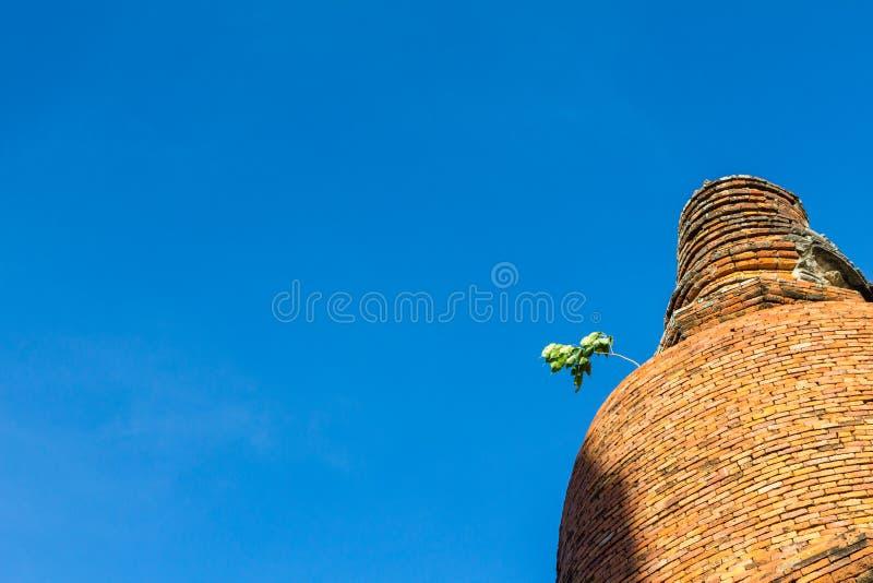 Albero sulla vecchia pagoda con il fondo del cielo blu a ayutthaya thailan immagine stock