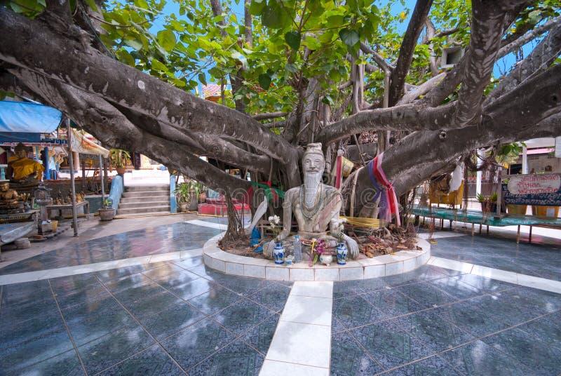 Albero in tempiale di Wat Phra Yai, KOH Samui, Tailandia fotografia stock libera da diritti