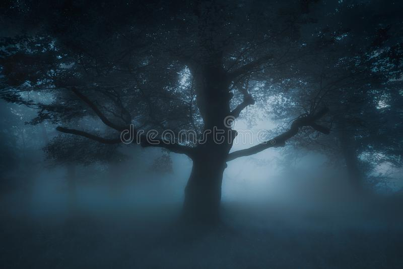Albero terrificante spaventoso sulla foresta di incubo fotografia stock