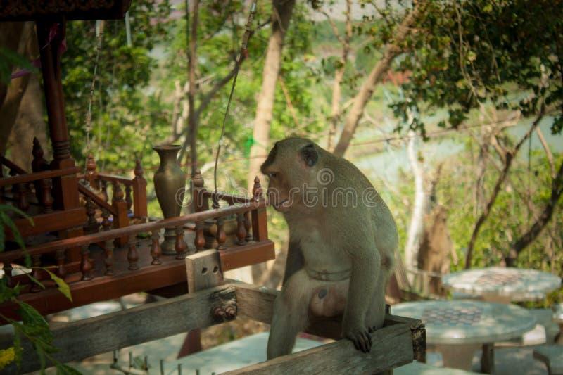 Albero triste del sito della scimmia degli animali immagine stock