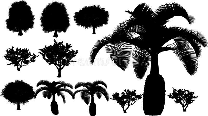 Albero tropicale di vettore   illustrazione vettoriale