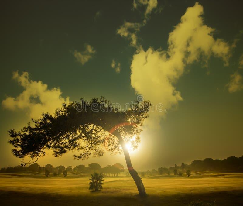Albero in un campo da golf immagine stock