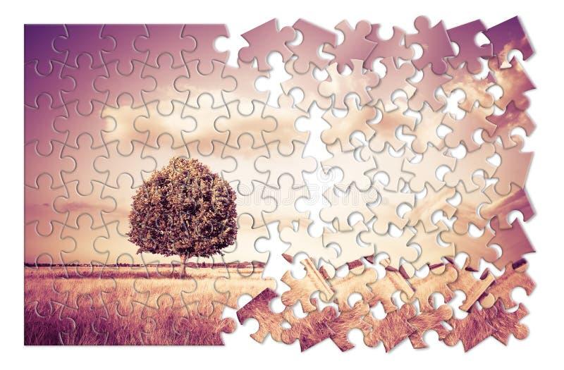 albero in un wheatfield della Toscana nella forma del puzzle - Tusc fotografia stock