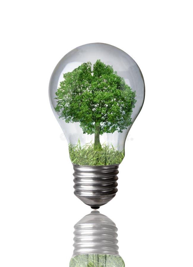 Albero in una lampadina fotografie stock