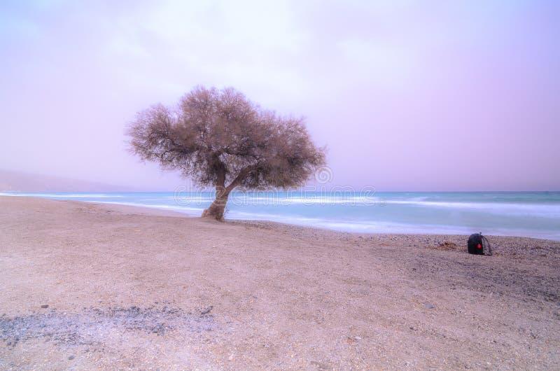 albero in una spiaggia al tramonto fotografie stock