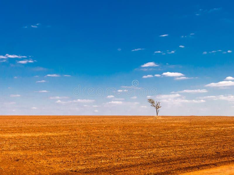 albero in una terra devastante del campo fotografia stock