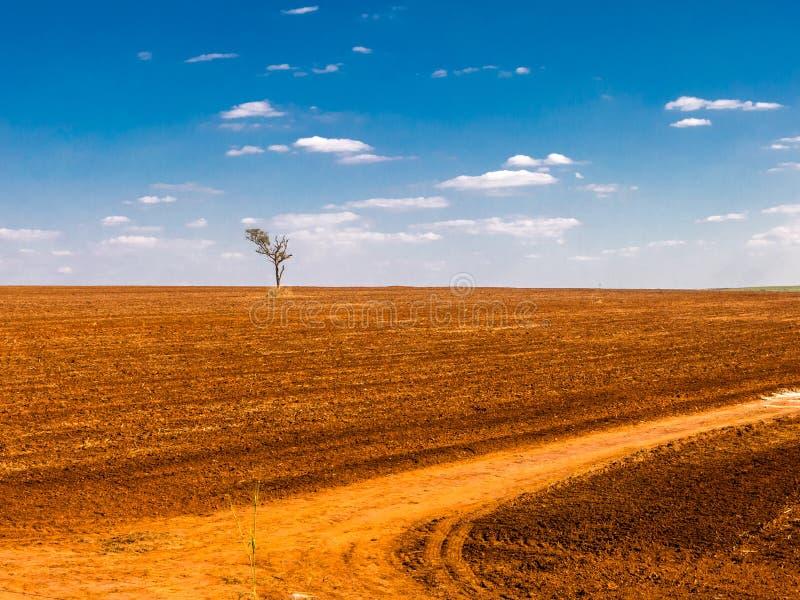 albero in una terra devastante del campo fotografie stock libere da diritti
