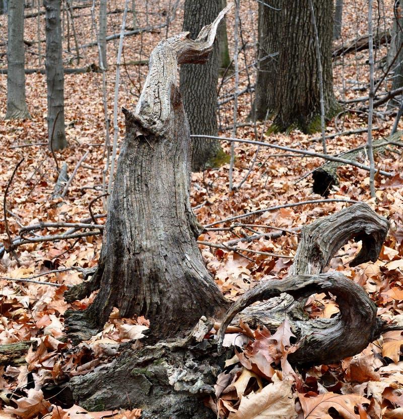 albero unico immagine stock