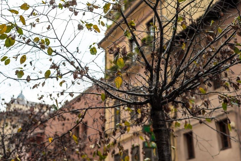 Albero urbano nella città senza foglie fotografia stock libera da diritti