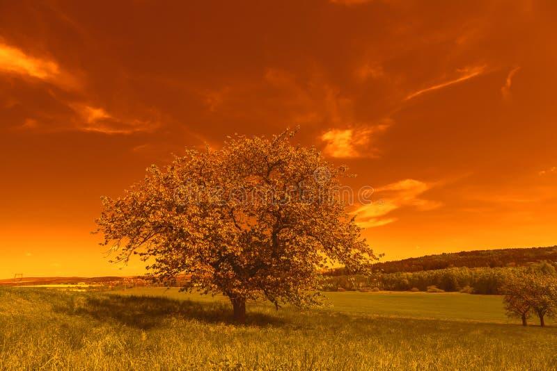 Albero variopinto di autunno al tramonto immagini stock