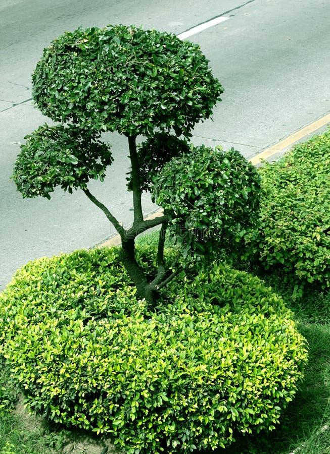 Albero verde. immagine stock