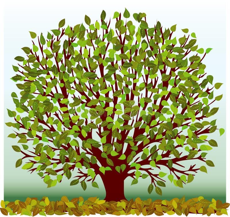 Albero verde illustrazione di stock