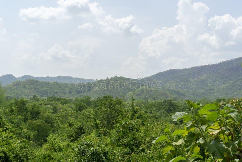 Albero verde della montagna cielo blu del ‹del †con la nuvola immagine stock libera da diritti