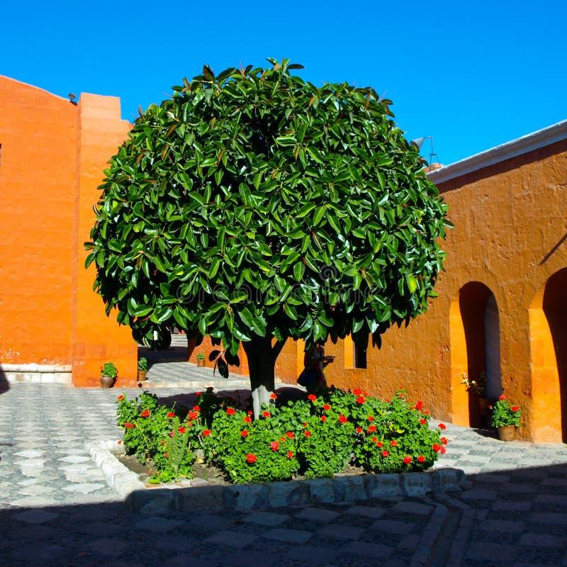 Albero verde di Santa Catalina Monastery a Arequipa fotografia stock