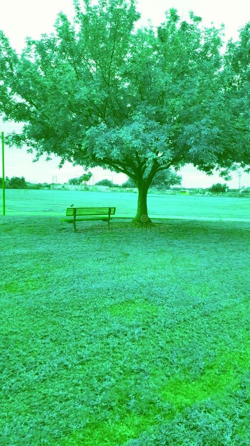 Albero verde gentile fotografie stock libere da diritti