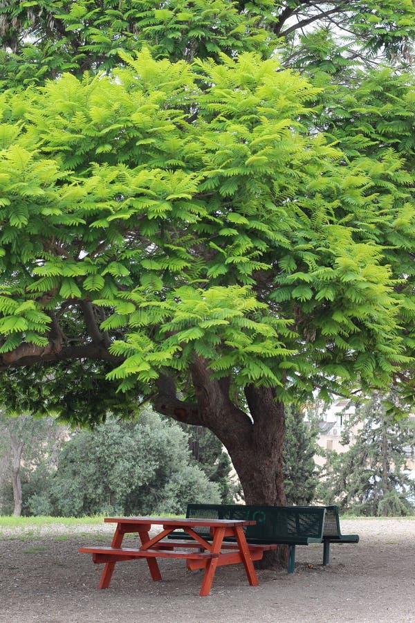 Albero verde nella sosta fotografia stock