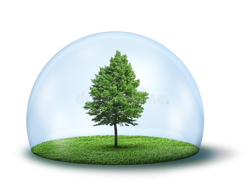 Albero verde solo sotto la cupola protettiva immagine stock libera da diritti