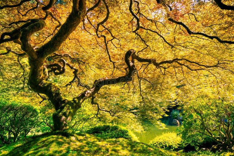 Albero verde stupefacente immagini stock