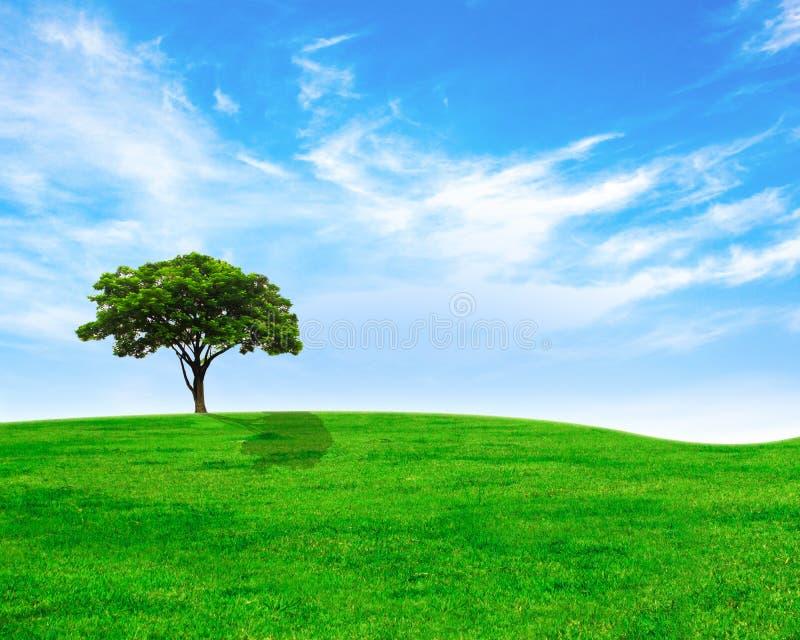 Albero verde su erba verde e sul cielo immagine stock libera da diritti