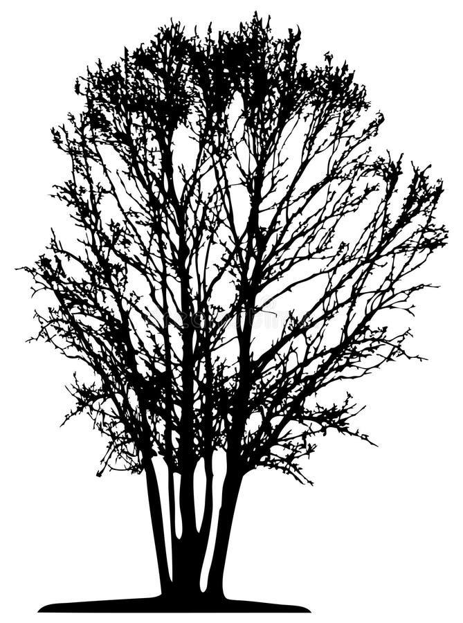 Albero (vettore) illustrazione di stock