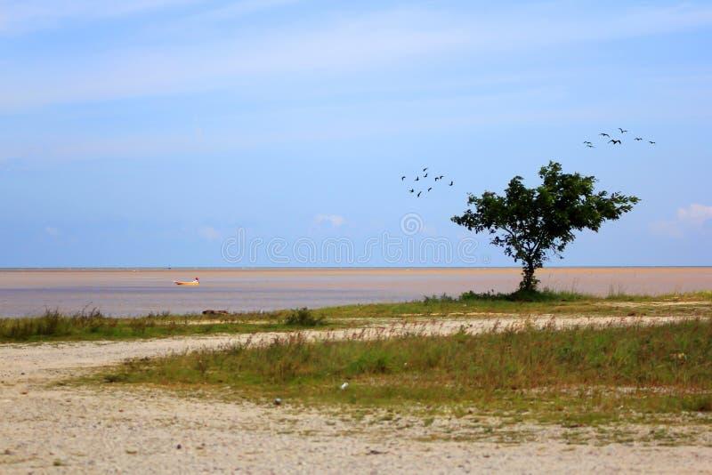 Albero vicino alla spiaggia fotografie stock libere da diritti