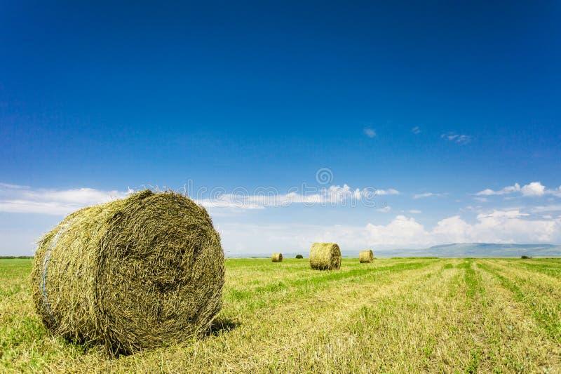 alberta тюкует временя прерии ландшафта сена полей сельское стоковое изображение