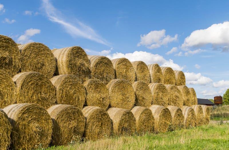 alberta тюкует временя прерии ландшафта сена полей сельское стоковая фотография rf