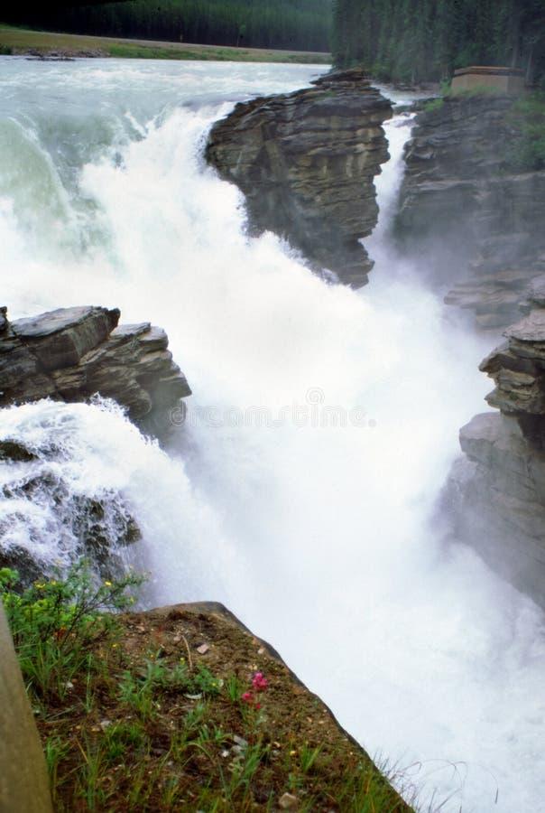 alberta athabaska Canada falls rzeczne góry skaliste obrazy royalty free