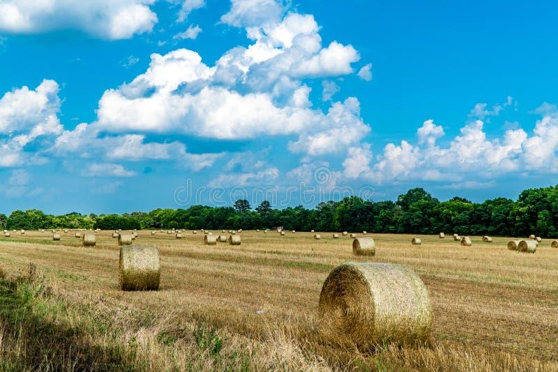 alberta beluje pola hay krajobrazu wiejskiego prerii lato zdjęcie royalty free