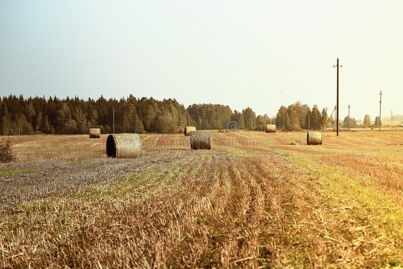 alberta beluje pola hay krajobrazu wiejskiego prerii lato Rolnictwa pole z niebieskim niebem i liniami energetycznymi Wiejska nat zdjęcia stock