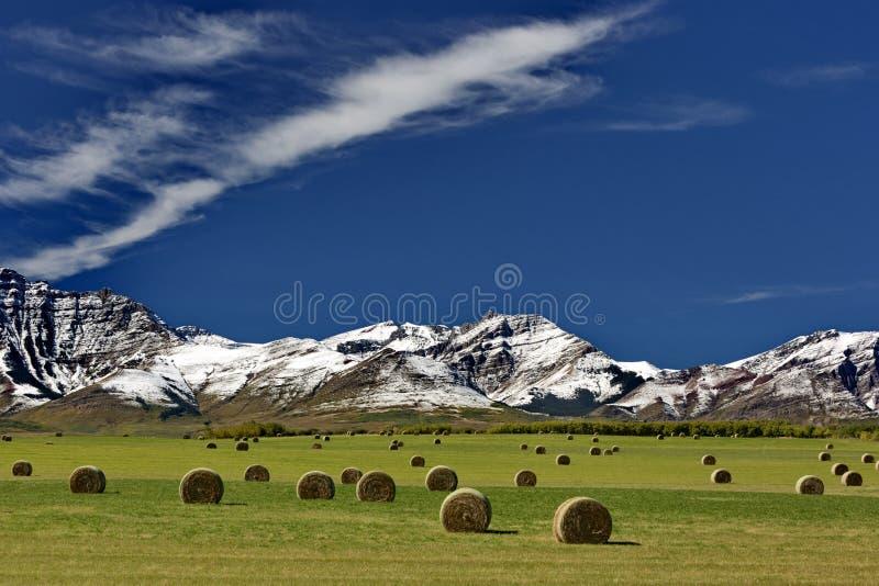 Alberta Countryside stockfotos