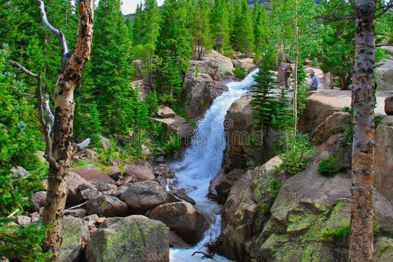 Alberta Falls i Rocky Mountain National Park royaltyfri bild
