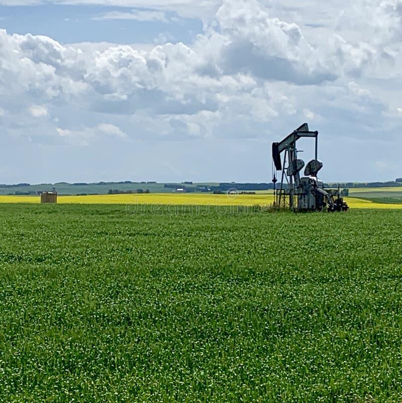 Alberta Farm Land lizenzfreies stockfoto