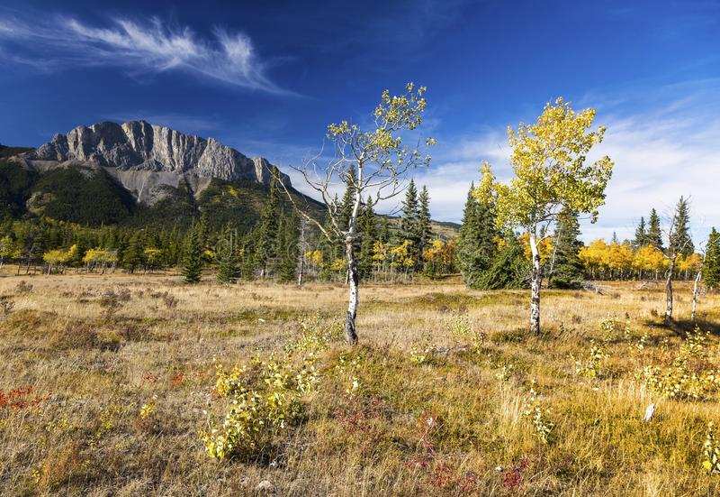 Alberta Foothills Autumn Landscape arkivbilder