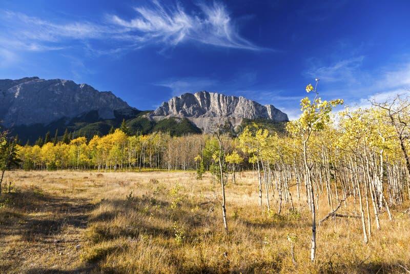 Alberta Foothills Autumn Landscape royaltyfri bild