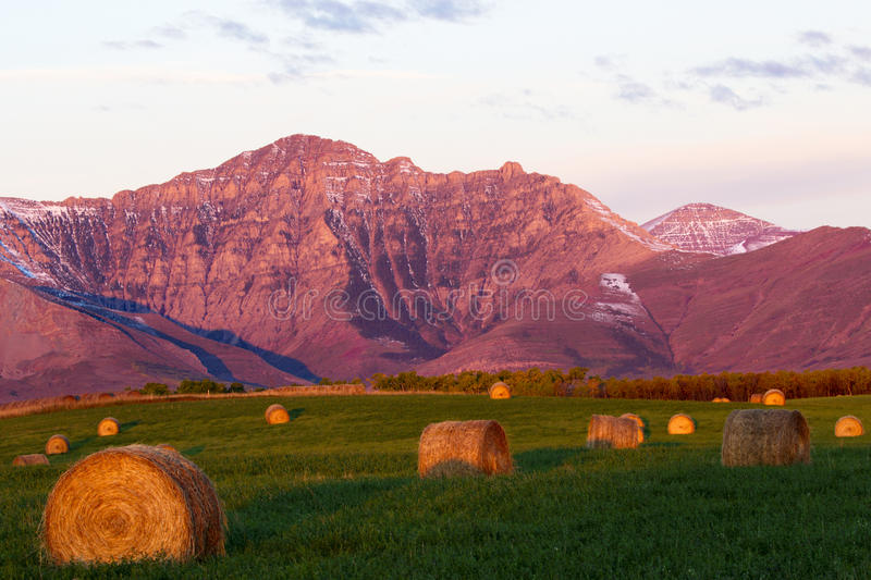 Alberta mountains, fields, and hay bales royalty free stock image