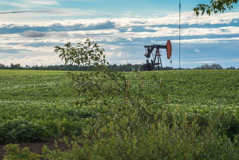 Alberta rural: Jaque da bomba de óleo no meio do campo da batata imagem de stock