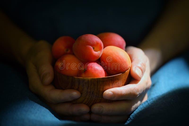 Albicocche organiche mature in ciotola fotografia stock