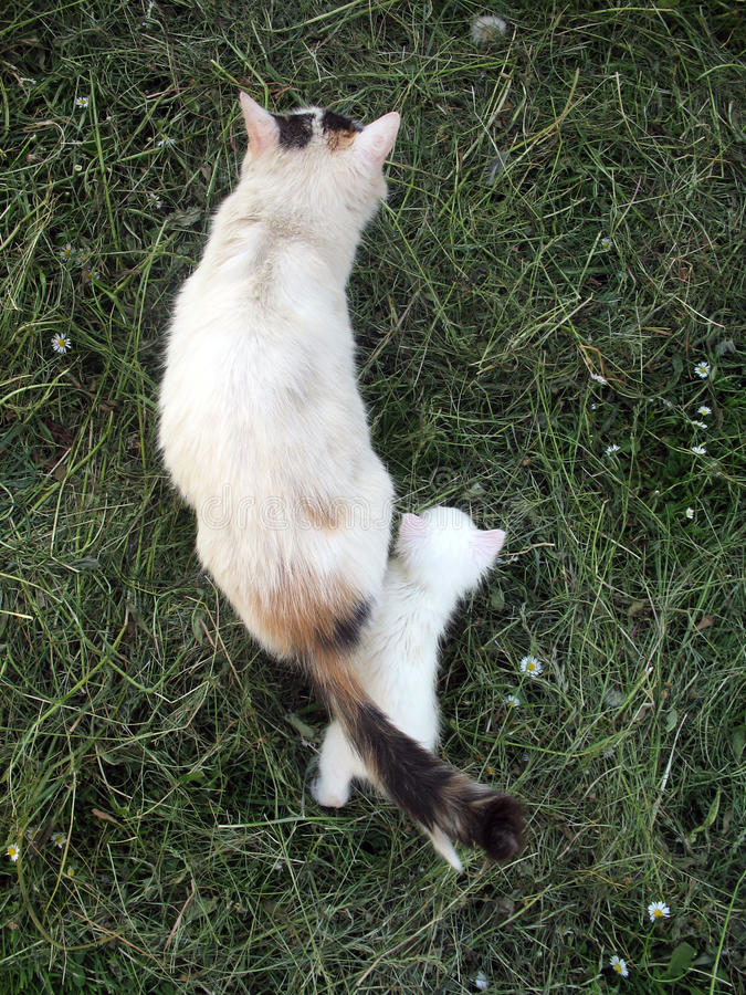 albino γατάκι στοκ φωτογραφίες
