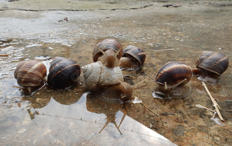 Albino snail and friends stock photos