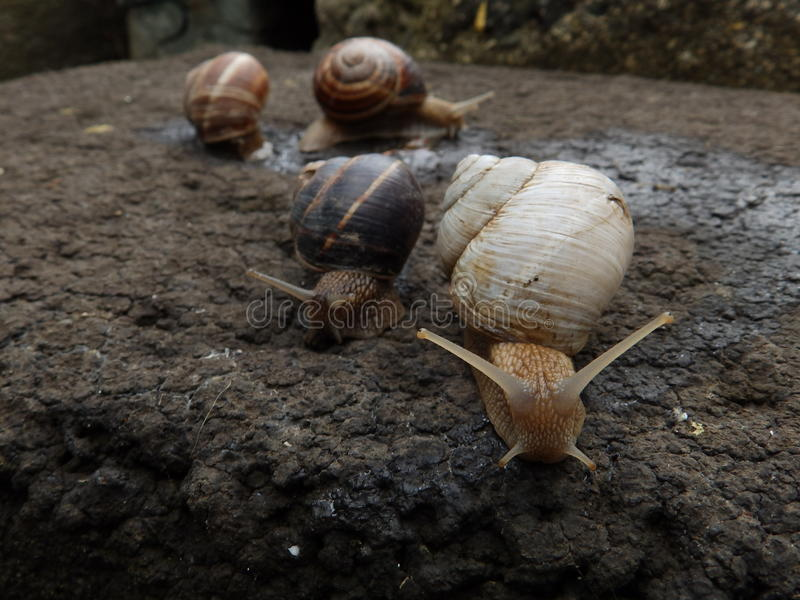 Albino snail and other three stock photo