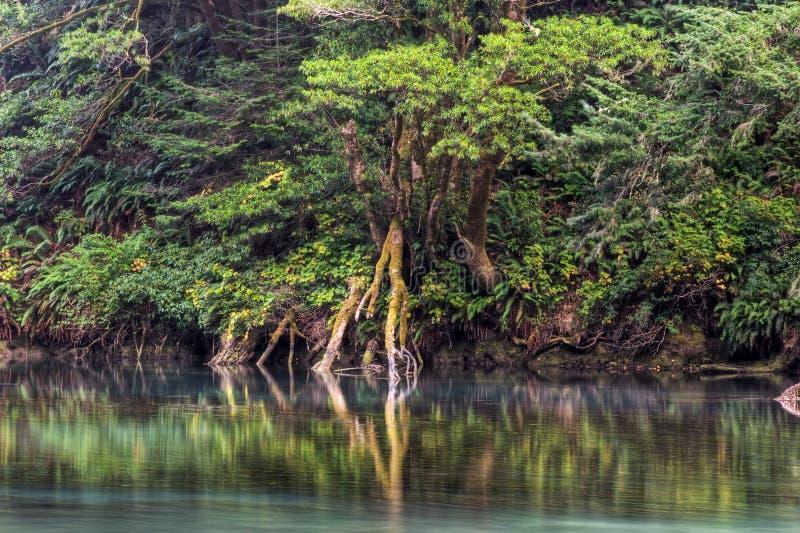 Albion Fluss-Querneigung stockfoto